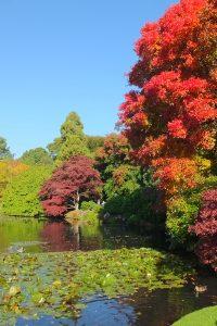 イギリスで紅葉を楽しむ ~Sheffield Park and Garden~