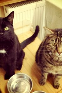 イギリスで猫を飼う
