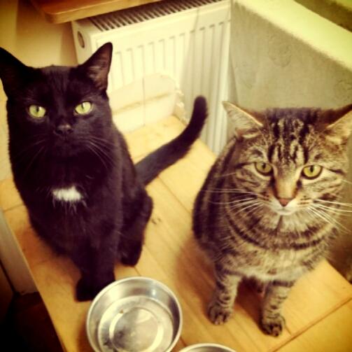 マンション~室内飼いの猫~★マンションで猫と暮 …